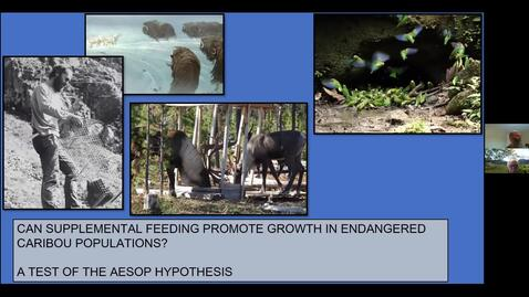 Thumbnail for entry Can Supplemental Feeding Promote Growth in Endangered Caribou Populations. A Test of the Aesop Hypothesis. Doug Heard - January 15 2021