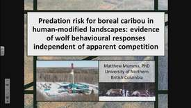 Thumbnail for entry Predation risk for boreal caribou in human-modified landscapes: evidence of wolf behavioural responses independent of apparent competition. - Dr. Matt Mumma, UNBC - February 2 2018